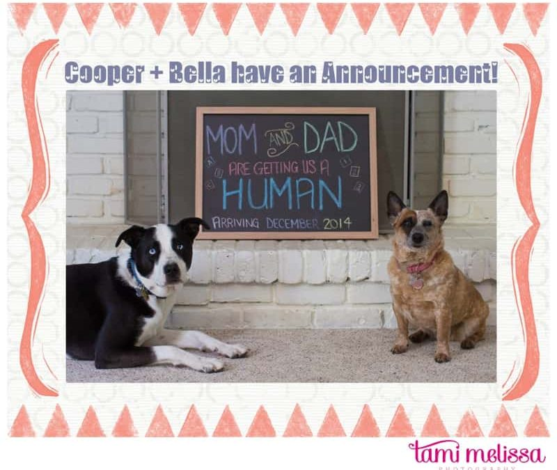 We're Expecting!