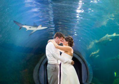 Renee-Clint-Currents-Ballroom-Adventure-Aquarium-Philadelphia-New-Jersey-Destination-Wedding-Photography-0051