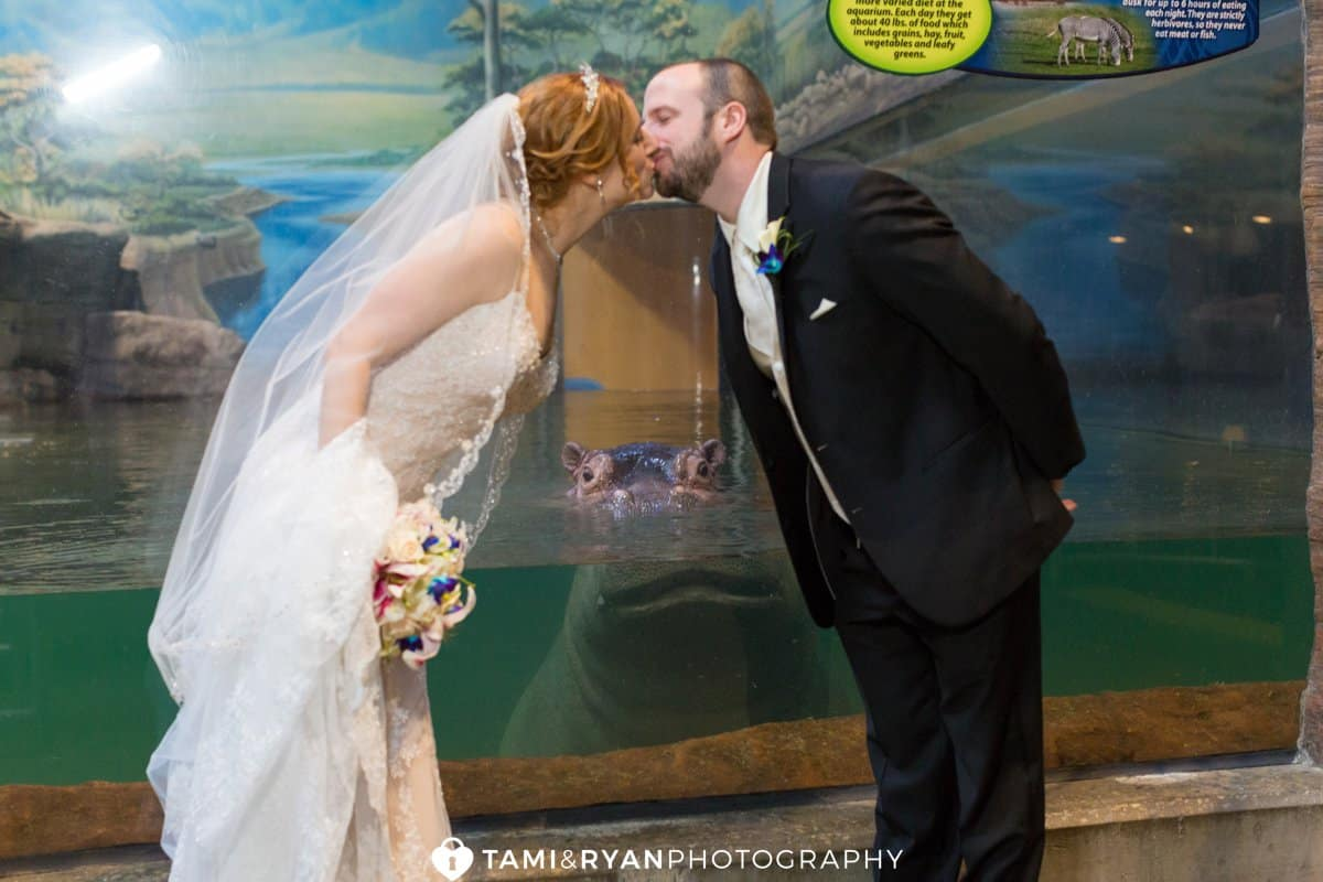 bride groom kiss aquarium hippo