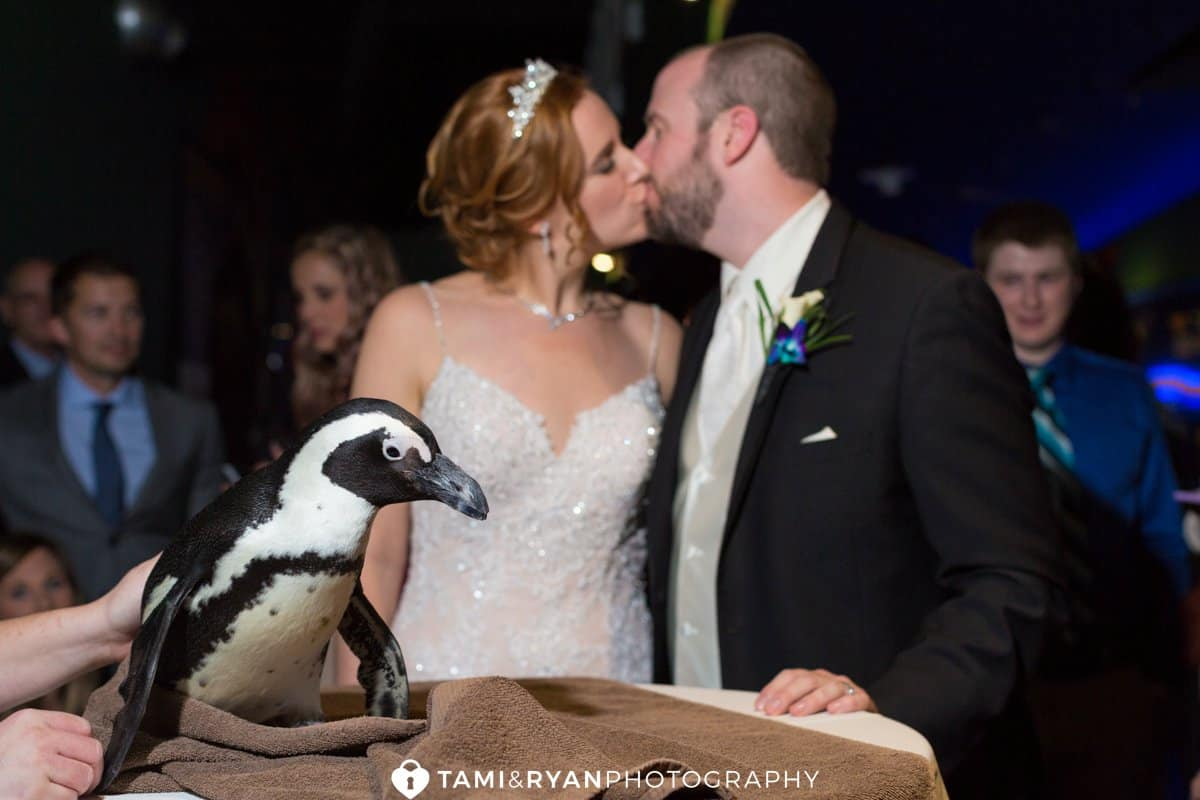 bride groom kiss penguin