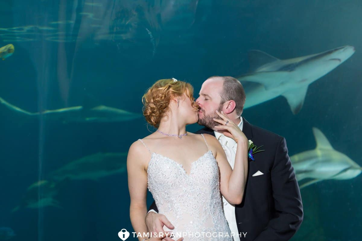 bride groom kiss shark tunnel