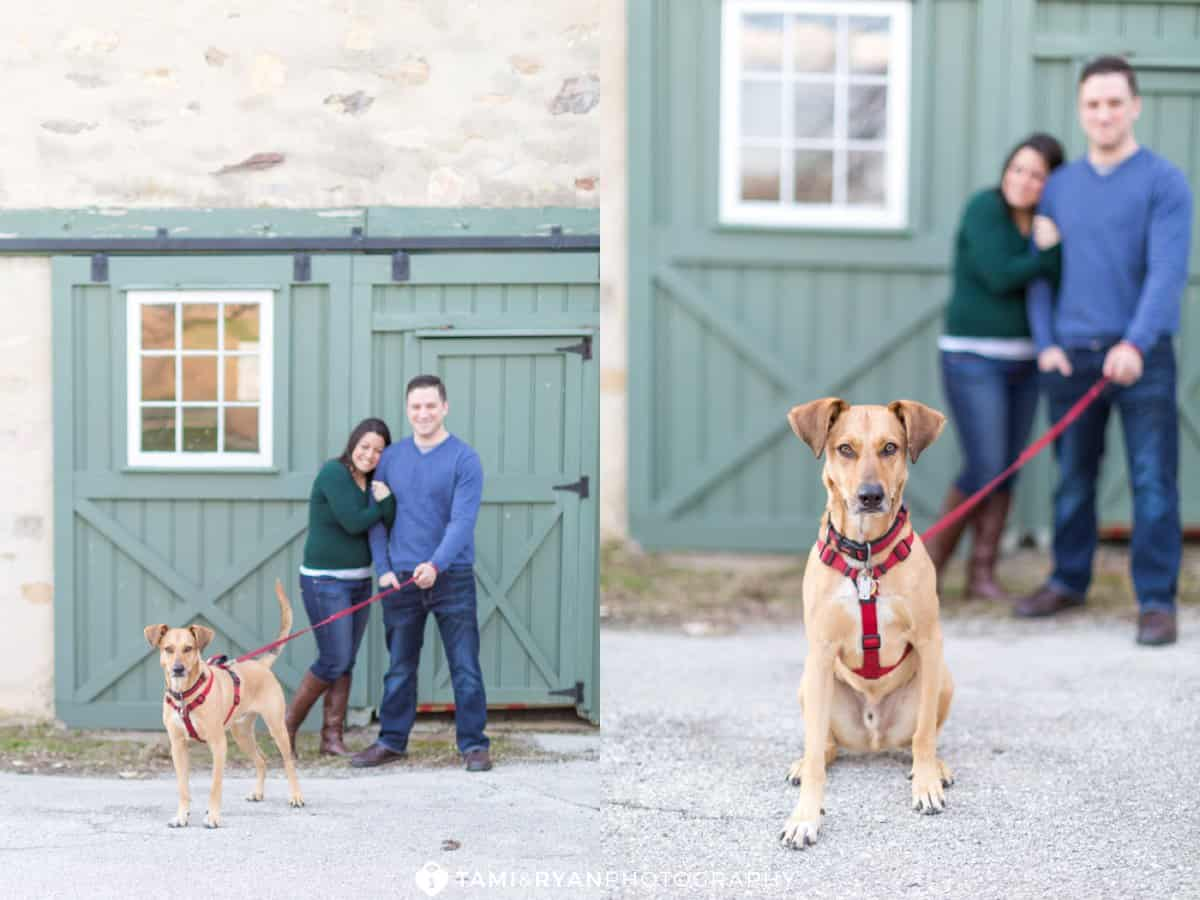 valley forge bride groom engagement session dog