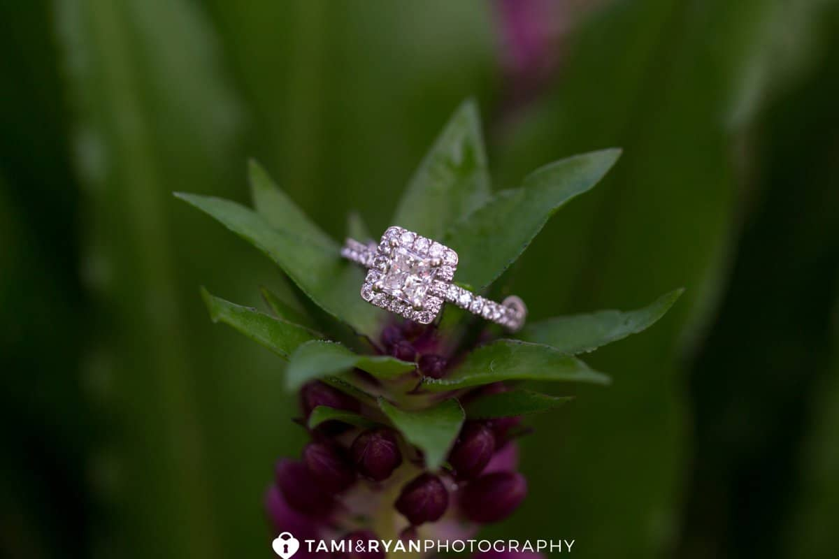 longwood gardens engagement photography