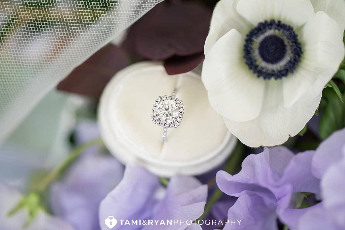wedding ring anemone